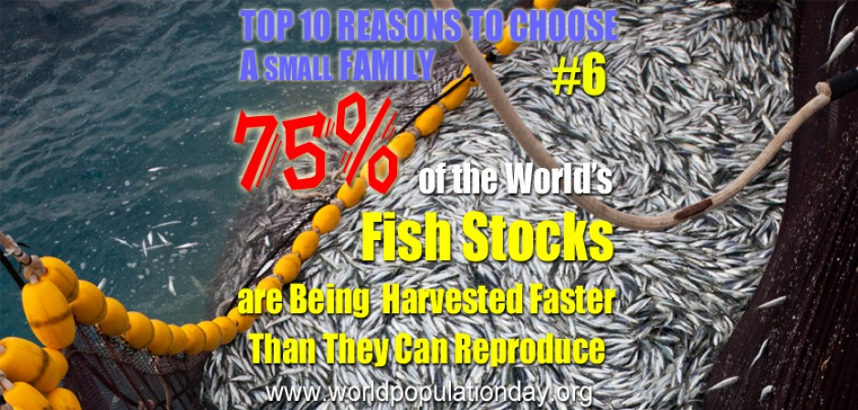 Top 10 Reasons to Choose a Small Family - #6